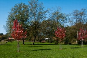 Hoquarton Park